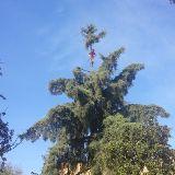 Foto de Arborista Sánchez: Poda, Derribo y Fumigación de Árboles Tlalpan