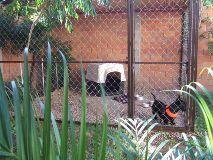 Foto de Tienda de Mascotas, Hotel Veterinaria y Estetica Madagascar de Movilcan