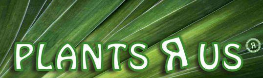 Plants R Us Cancún