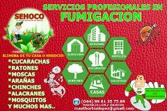SEHOCO SERVICIOS PROFECIONALES EN CONTROL DE PLAGAS Cancún